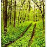 Poveste în Pădurea verde